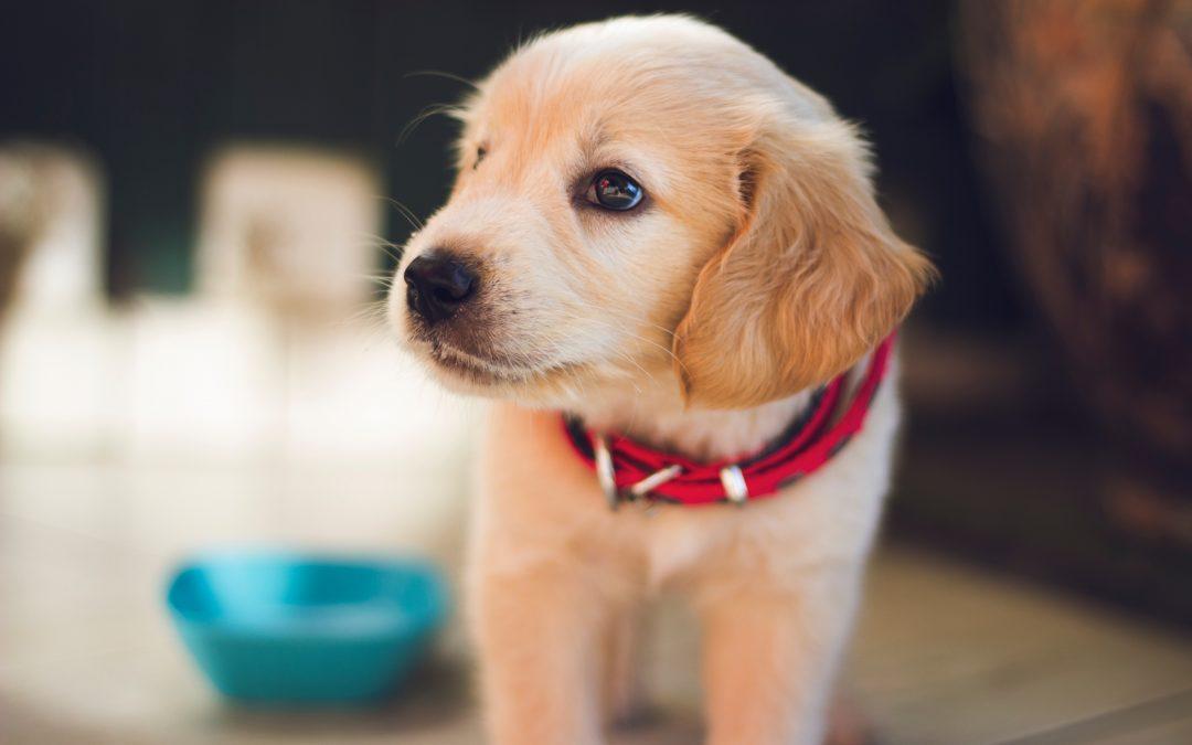 Hondenverzekering afsluiten: waar moet ik op letten?