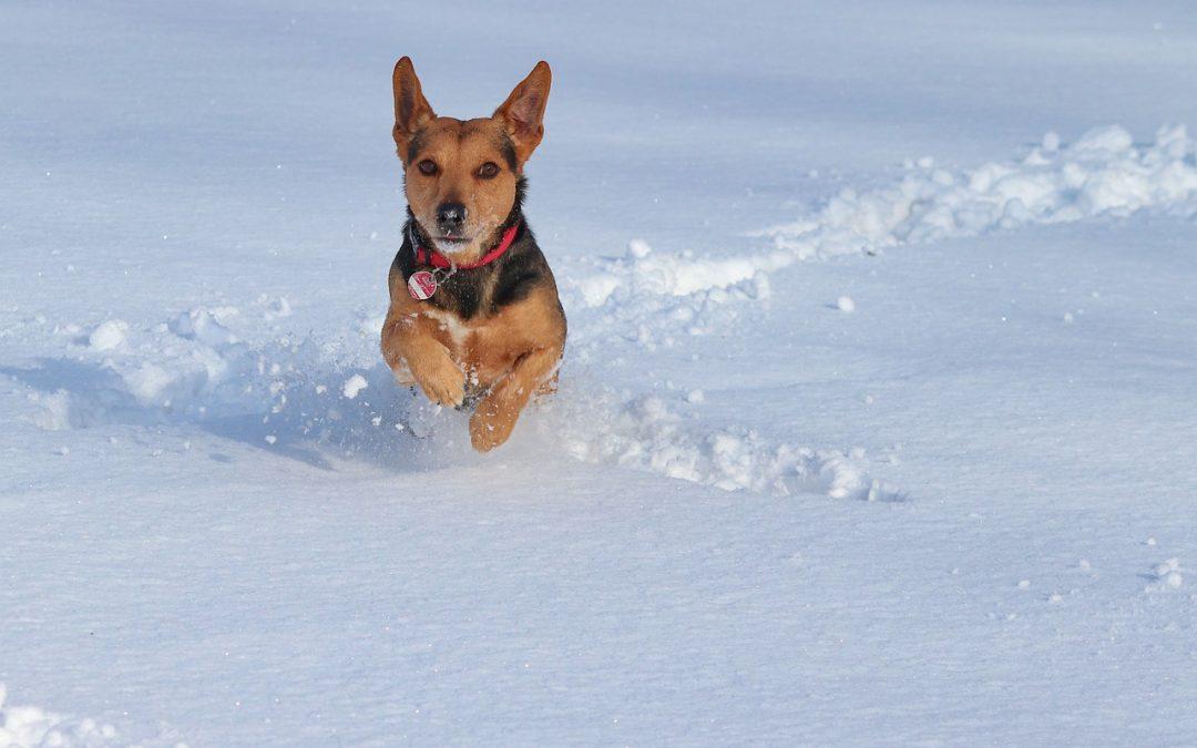 Wintertips voor de hond