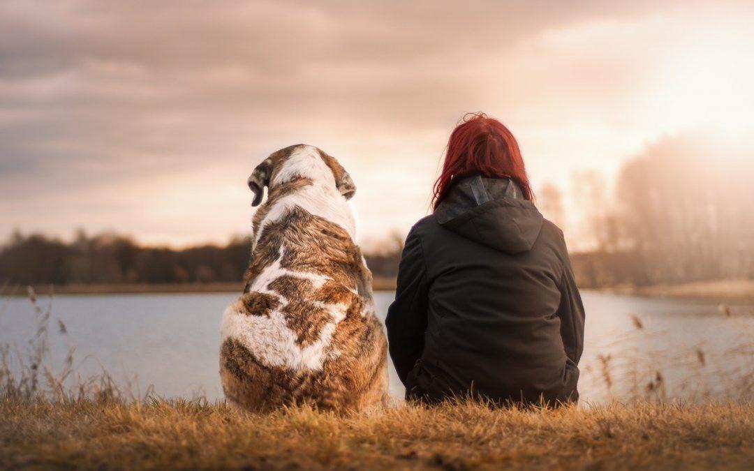 Waarom een hond als huisdier?
