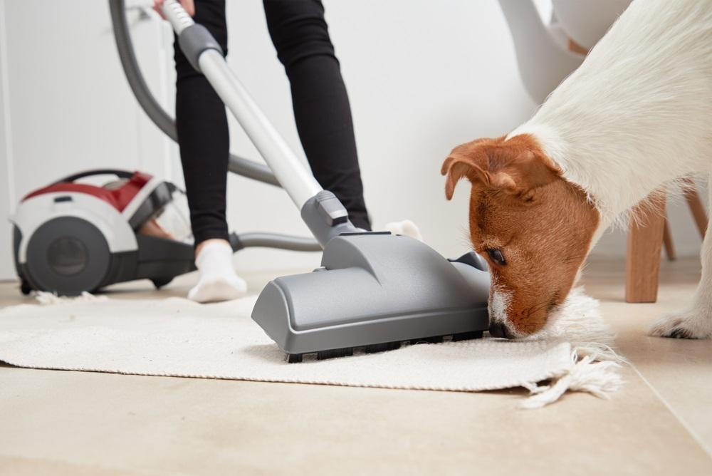 Stofzuiger voor hondenharen beste