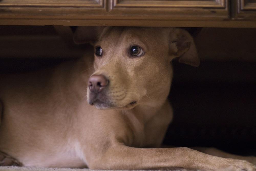 Kalmeringsmiddel hond