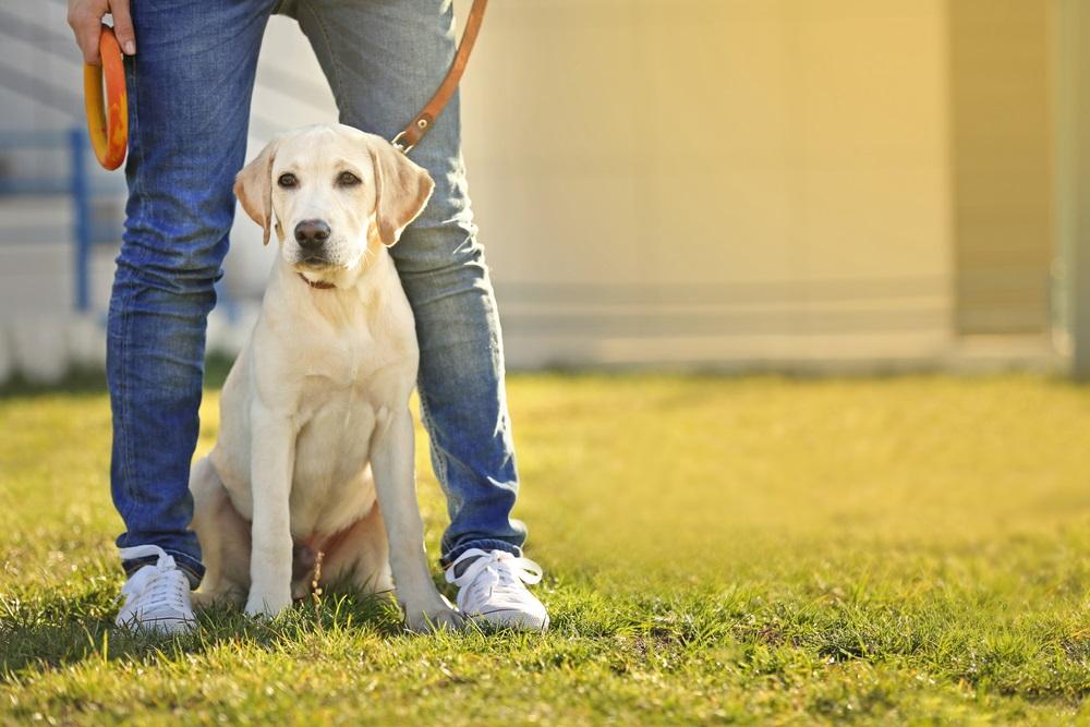 beste hondenriem tegen trekken