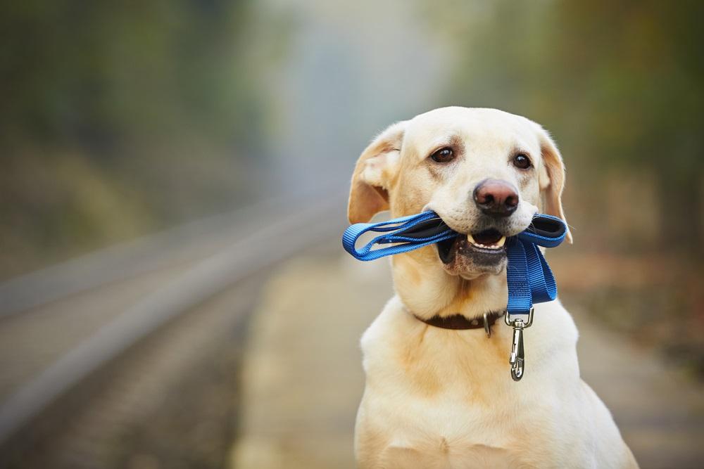 goede hondenriem