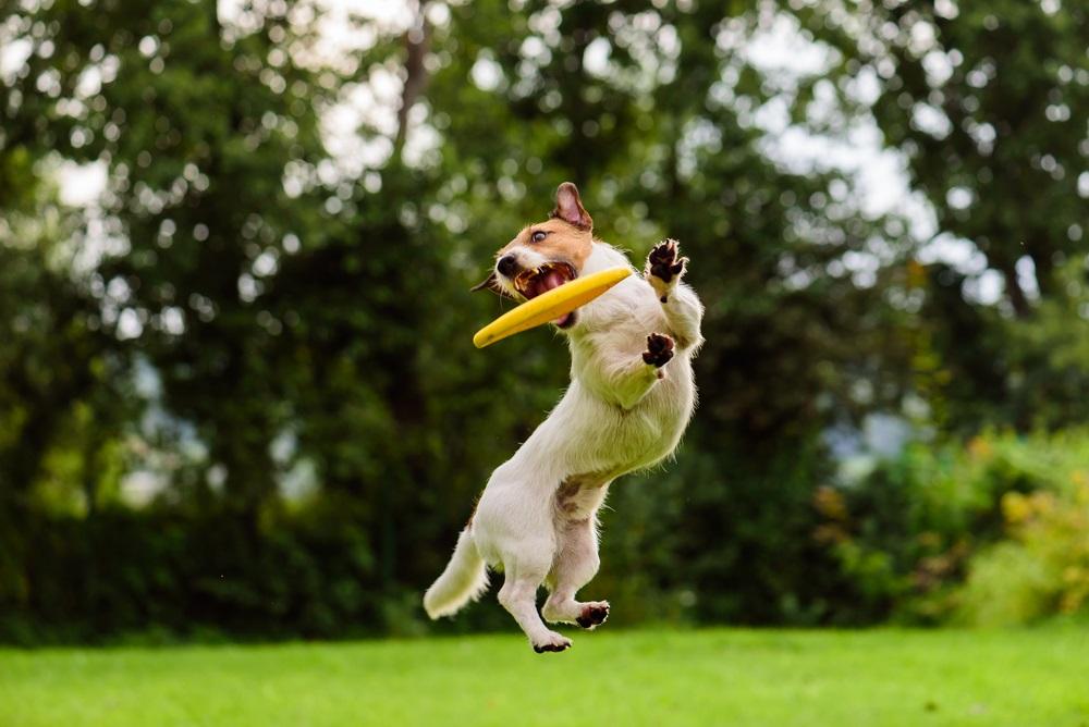 Hondenfrisbee beste