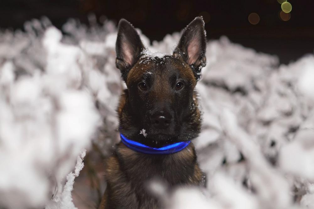Lichtgevende halsband hond