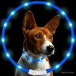 10. Mefix Led Halsband Hond