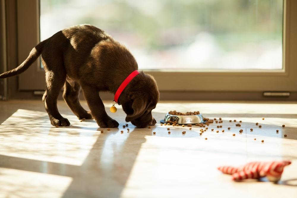Smolke hondenvoer beste