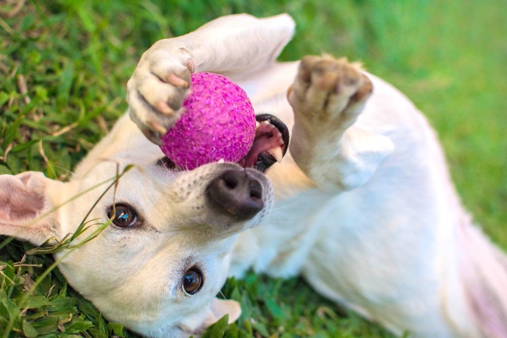 Hondenbal beste